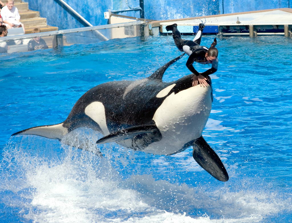 seaworld cited over safety of trainers who work with orcas | 89.3 kpcc