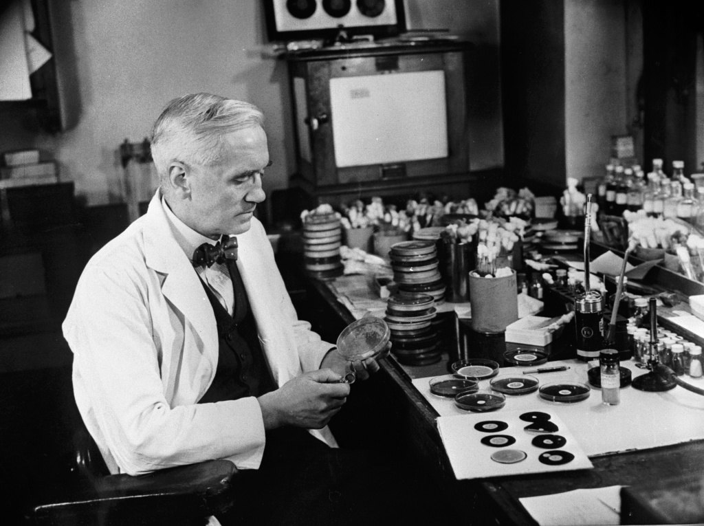 Sir Alexander Fleming (1881 - 1955), discoverer of penicillin, studies mould cultures in his laboratory at the Wright Fleming Institute in London. Fleming also developed a technique of 'painting' pictures with germs, drawing outlines on small pieces of paper, which would grow into a picture as the microbes multiplied.