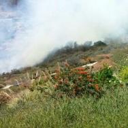 Pali Fire