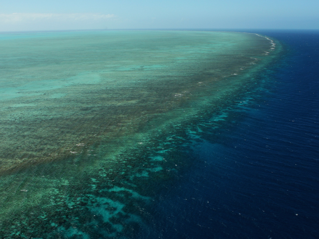 Video: Massive 'doughnut' reef discovered behind Australia's Great Barrier Reef | 89.3 KPCC