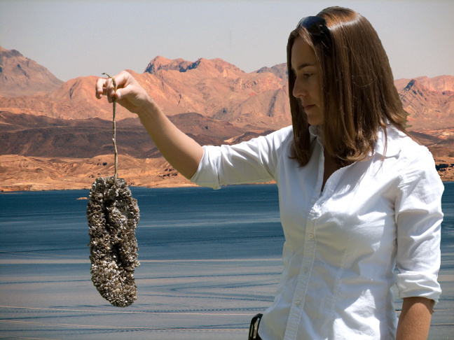 Quagga mussels on a flip flop.