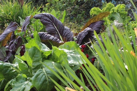 Vegetables in Ron Finley's garden