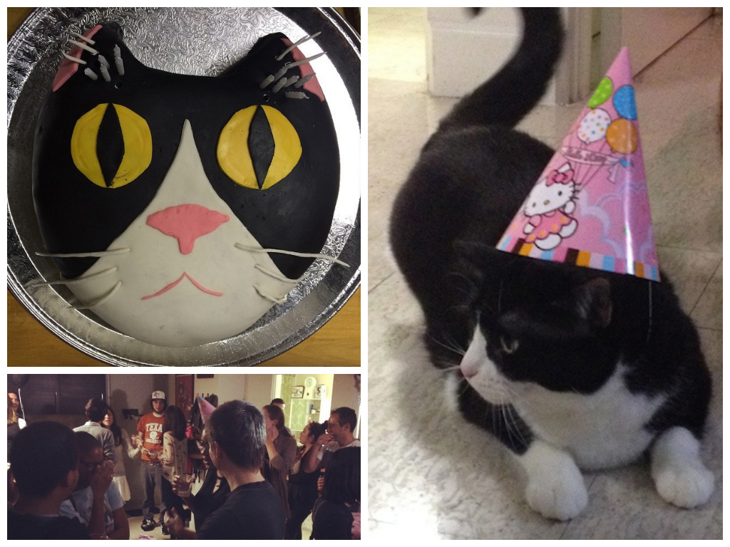 You, too, can throw your cat a birthday party. (Clockwise from right) The birthday girl Penny, the party in full effect, and a cake made in the shape of Penny's face.