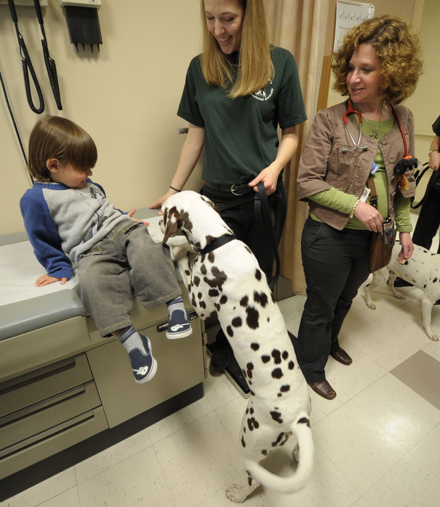 Patient David DeNunzio, head dog trainer Melissa Harris and Chief of Pediatrics Dr. Robin Jacobson play with Gracey the Dalmamtion of