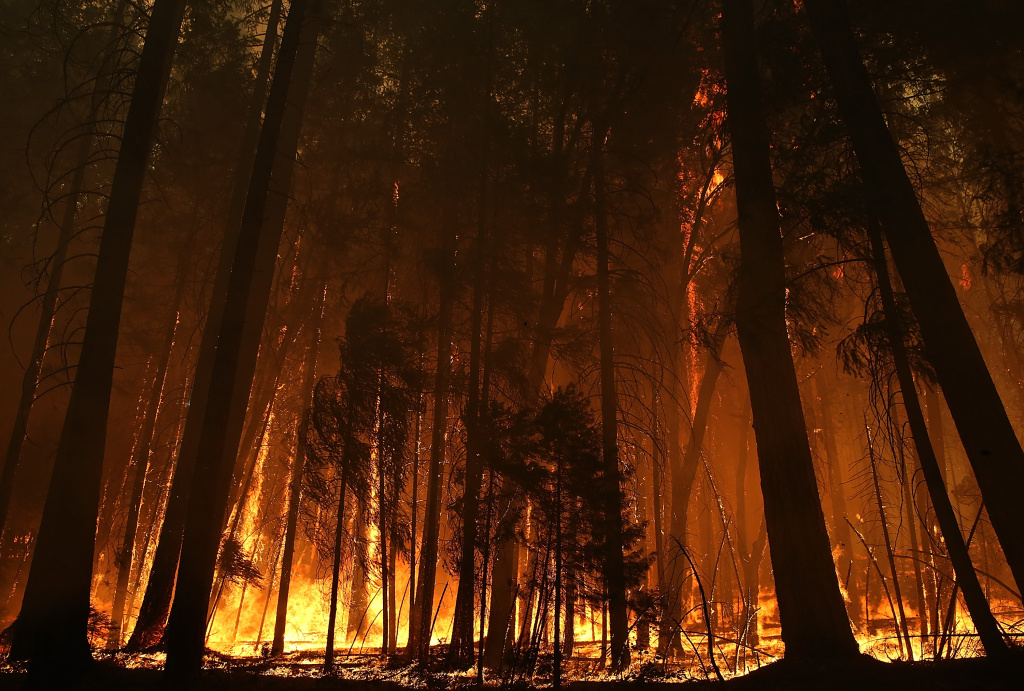 Flames from the Rim Fire consume trees on August 25, 2013 near Groveland, California. The Rim Fire continues to burn out of control and threatens 4,500 homes outside of Yosemite National Park. Over 2,000 firefighters are battling the blaze that has entered a section of Yosemite National Park and is currently 15 percent contained.