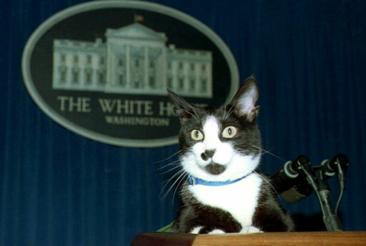 Socks, the White House cat, sits atop the podium in the White House press briefing room 19 March 1994. A groundskeeper who regularly walks Socks brought him into the press room and placed him unannounced on the podium. Socks stayed there for a few minutes as photographers took his picture before the goundskeeper said it was time to go and took Socks away.