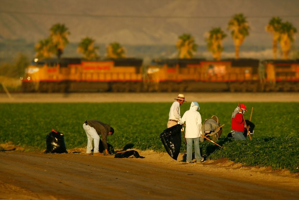 A south-bound train passes farm workers shortly after sunrise on October 10, 2007 in the Coachella Valley near Mecca, California. Some Coachella Valley farmworkers are suing over poor working conditions and retaliation once they complained.