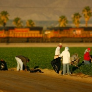 Drought Forces Water Cutbacks To Southern California Farms