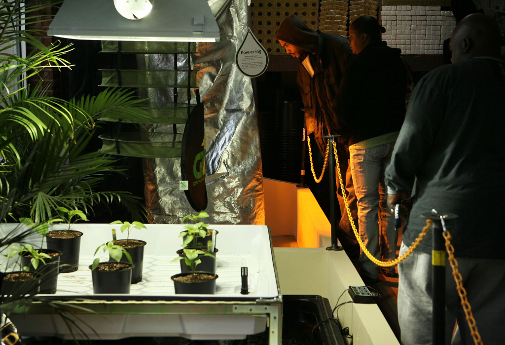 People check out the hydroponic plant growing system in the weGrow marijuana cultivation supply store during its grand opening March 30, 2012 in Washington, DC.