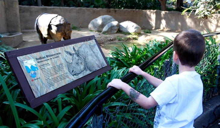 A child at a safe distance from the Indian rhino at the LA Zoo. When the female goes into estrus, watch out!