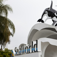 Killer Whale Kills Trainer Before Show At SeaWorld