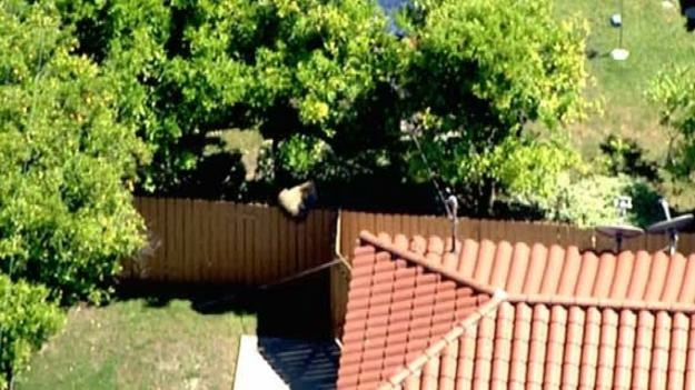 A bear wandered into the backyard of a house in La Canada Flintridge during a heat wave on May 13, 2013. This image was captured by NBC4.