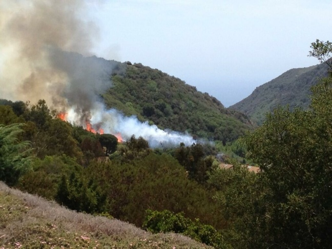 A brushfire burned 5 acres and came close to forcing evacuations of residents in the Pacific Palisades Sunday. Resident Amy Baum took this photo near her home.