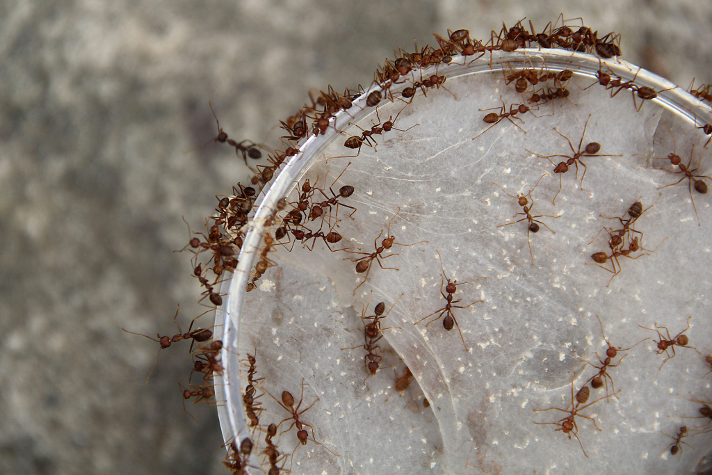 Take Two® | How to rid your house of ants | 89.3 KPCC