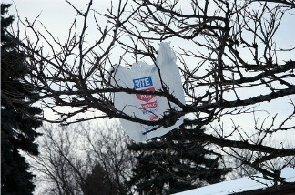 A plastic bag caught in a tree.
