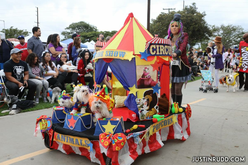 Some costumed dogs even ride in their own float, like these circus animals in the 2016 Haute Dog Halloween Parade in Long Beach.