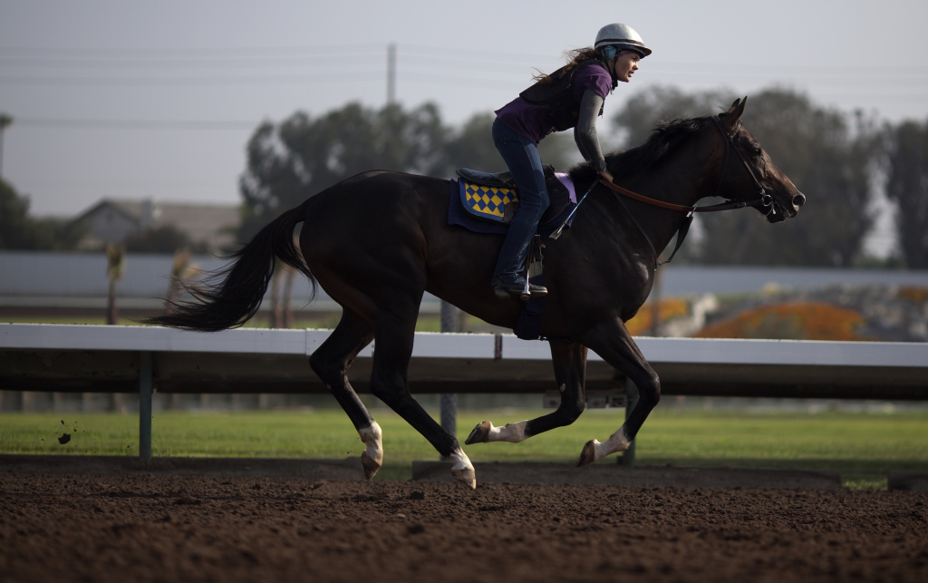 A rider warms up a race horse during a morning workout session at Los Alamitos Race Course.
