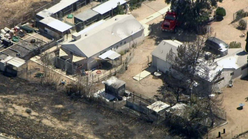 Five dogs were killed, several people were burned and a person suffered a dog bite when a brush fire spread to a dog rescue on Wednesday, July 6, 2016 in Palmdale.