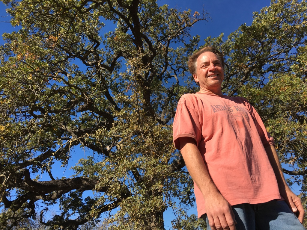 Vince Curtis stands in front of a mature valley oak. He hopes the ones he plants will someday grow this tall.