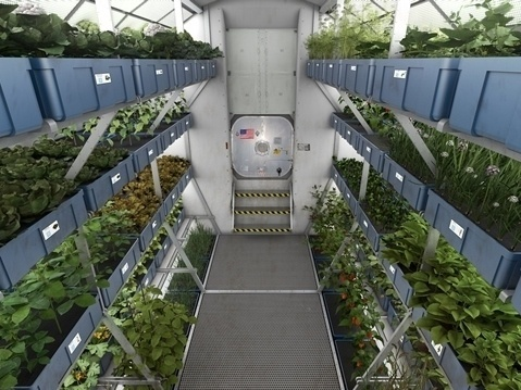 Crops from the Veggie plant growth system on the International Space Station's orbiting laboratory are sample-ready for crew members of Expedition 44.