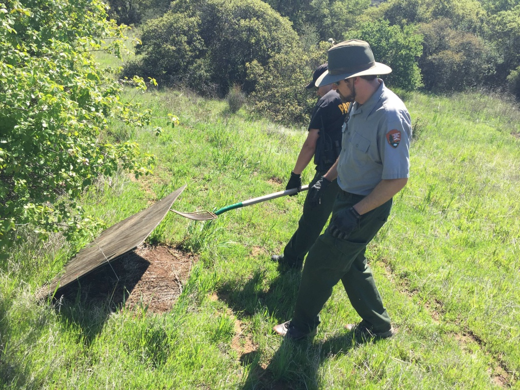 Rangers work to clean up snake traps throughout Decker Canyon.