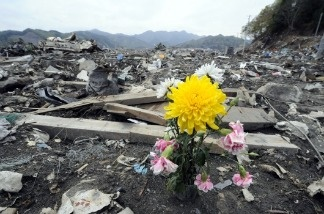 A flower sits among the rubble in the tsunami-devastated town of Otsuchi, Iwate prefecture on May 10, 2011. A new report released this week highlighted the severity of the disaster and plans for a mass evacuation of Tokyo due to nuclear meltdown concerns.