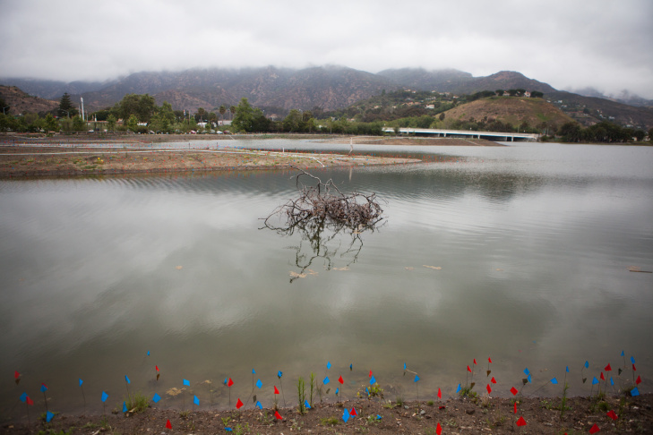 Submerged trees provide habitats for the wildlife in Malibu Lagoon. The blue and red flags mark some of the thousands of new native plants. The lagoon was once covered by baseball fields. California State Parks bought back the land in 1983.