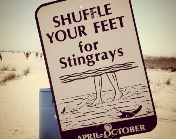 stingrays stingray sign beach shuffle