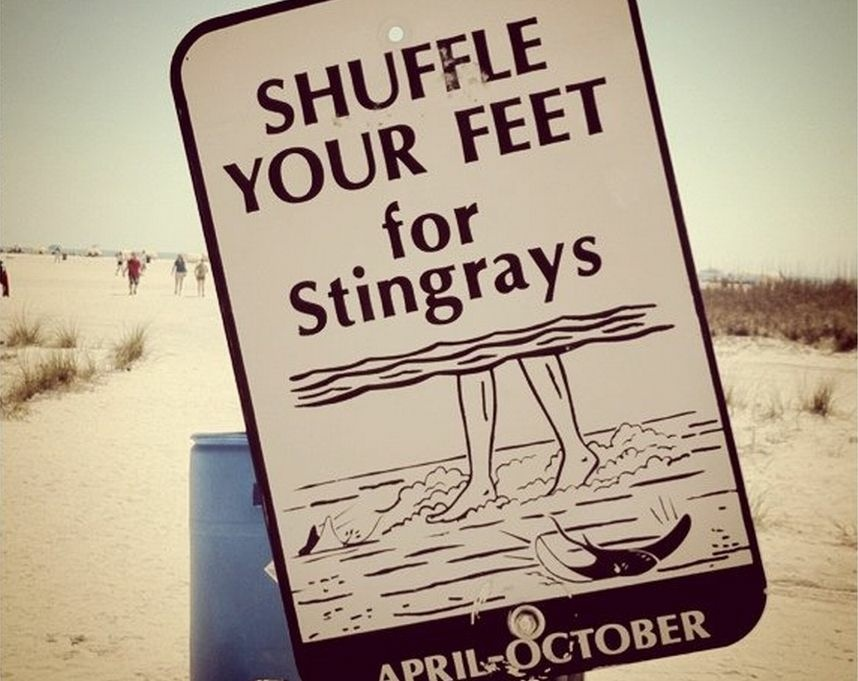 Beachgoers are recommended to do the stingray shuffle.
