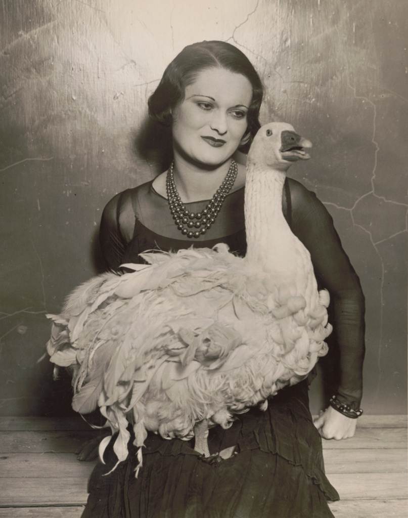 'Floradora goose' at 41st annual Poultry Show, Madison Square Garden, 1930.