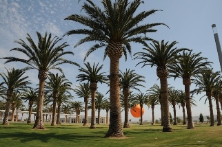 The Great Park in Irvine celebrates its seventh anniversary this weekend.