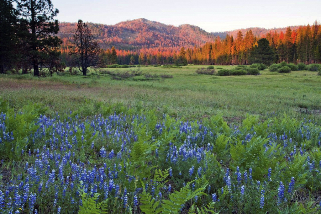 A photo provided by The Trust for Public Land shows Ackerson Meadow in Yosemite National Park, Calif. National Parks like Yosemite are overseen by the Department of the Interior.