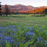 A photo provided by The Trust for Public Land shows Ackerson Meadow in Yosemite National Park, Calif. Visitors to the park now have more room to explore nature with the announcement on Wednesday that the park's western boundary has expanded to include Ackerson Meadow, 400 acres of tree-covered Sierra Nevada foothills, grassland and a creek that flows into the Tuolumne River.