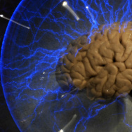"A human brain — part of a 2009 exhibition called ""Brain: a world inside your head"", in Sao Paulo, Brazil."
