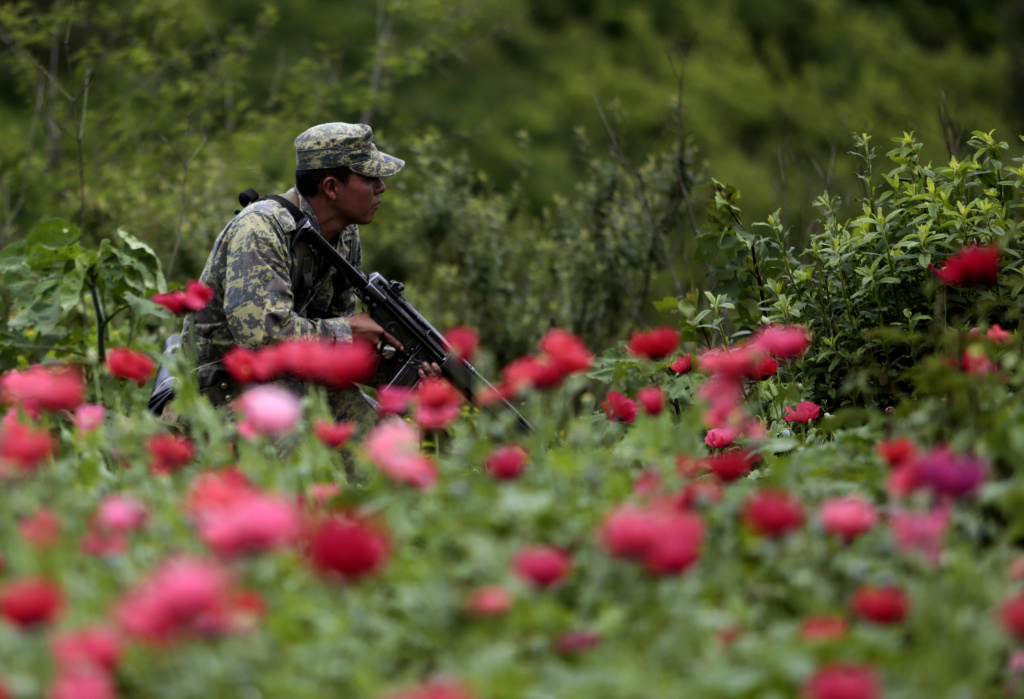 Take two black tars dangerous rise from mexicos heroin fields mexican soldiers stand in a poppy flowers field before they are cut off at petatlan mightylinksfo
