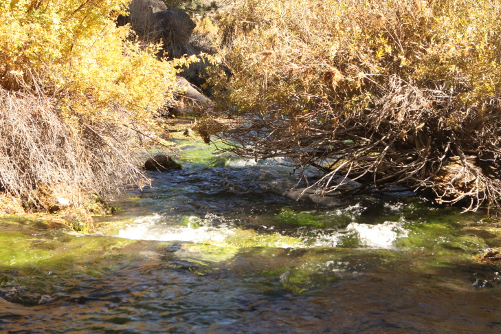 Headwater at the Owens River, which feeds into the L.A. Aqueduct.
