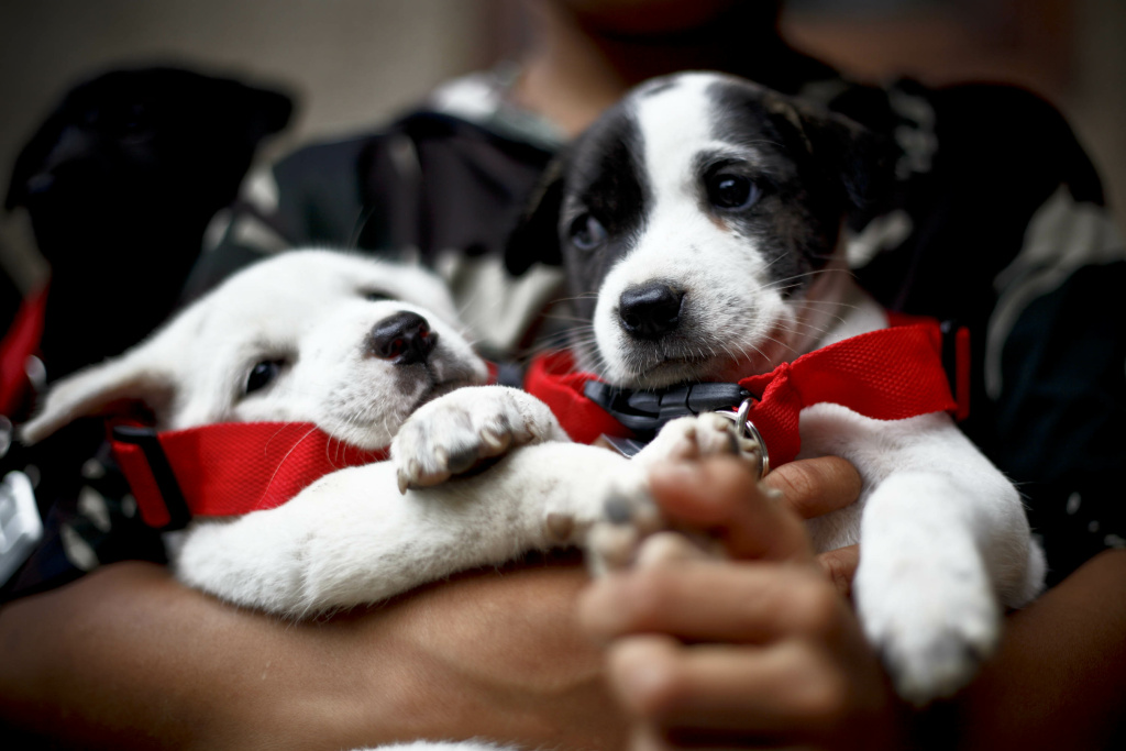 Close up of puppies when the BAWA team gives vaccinations during an outbreak of rabies on Dec. 2, 2010 in District Karangasem, Bali, Indonesia.