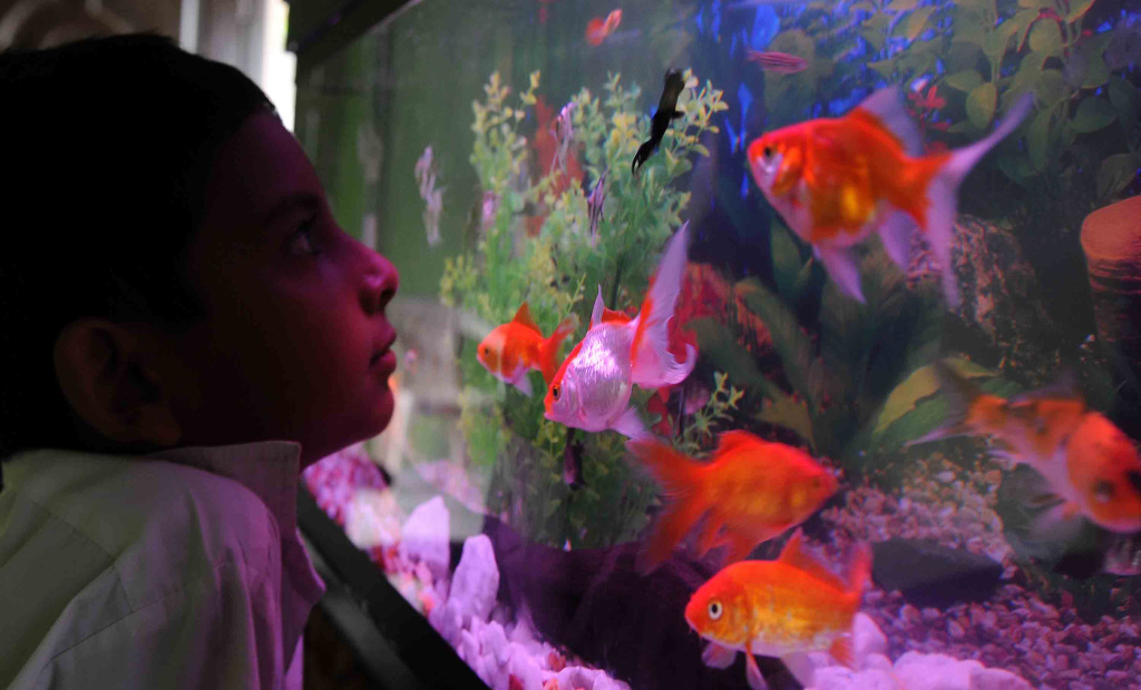 A child looks at a fish tank in Colombo on October 12, 2010.