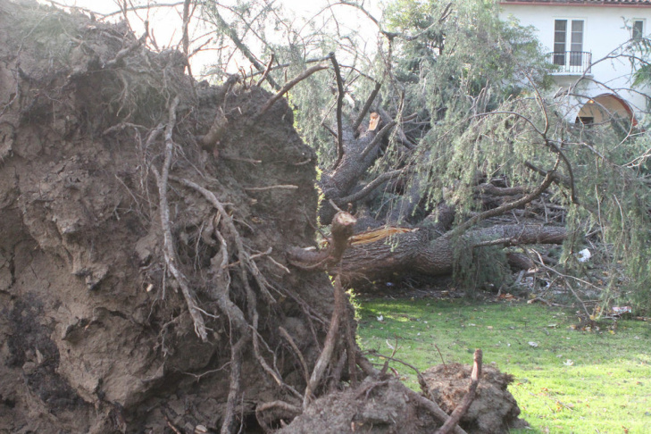 PASADENA, CA - DECEMBER 1:  A tree lies fallen between the cars of a playground train after strong Santa Ana Winds cause the worst local wind damage in decades on December 1, 2011 in Pasadena, California. As many as 230,000 were without power and the city of Pasadena closed schools and declared a state of emergency.Ê (Photo by David McNew/Getty Images)