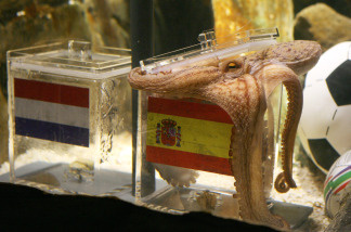 An octopus named Paul opens a box with decorated with a Spanish flag and a shell inside on July 9, 2010 at the Sea Life aquarium in Oberhausen, western Germany.