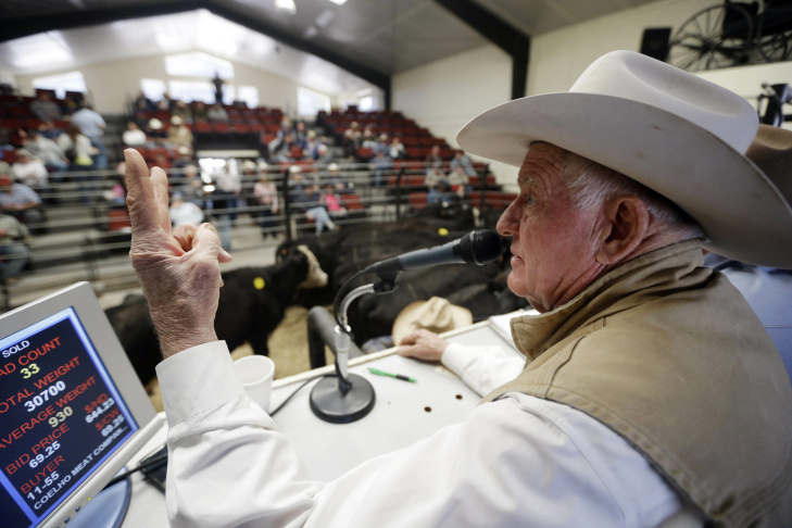 In this Tuesday Jan. 14, 2014 photo, Jim Warren, owner of 101 Livestock Market, conducts a cattle auction in Aromas, Calif. California's worsening drought is forcing many ranchers to sell their cattle and other livestock because their pastures are too dry to feed them and it's getting too expensive to buy hay and other supplemental feed. California only got a fraction of its normal rainfall last year, leaving reservoirs and groundwater levels at record lows and prompting many cities to cut water usage.