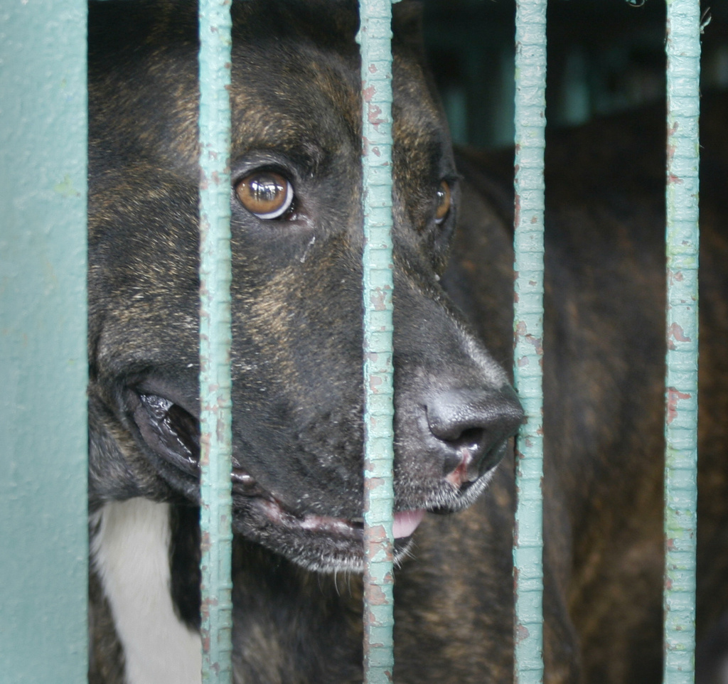 Orange County is proposing mapping out places where dogs considered to be dangerous stay.
