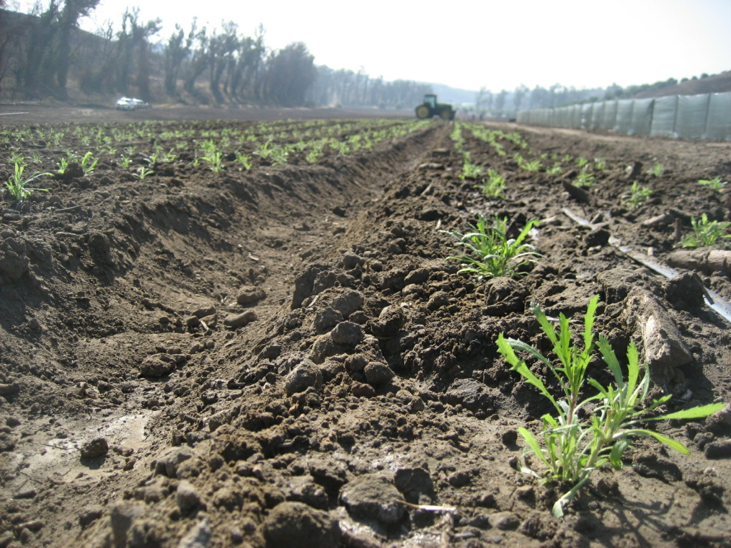 The Irvine Ranch Conservancy's native farm will provide seed for habitat restoration.