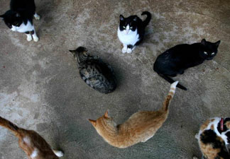 Advocates for Los Angeles' stray cats and birds are locked in dispute over a suspended city program to neuter and release the animals.