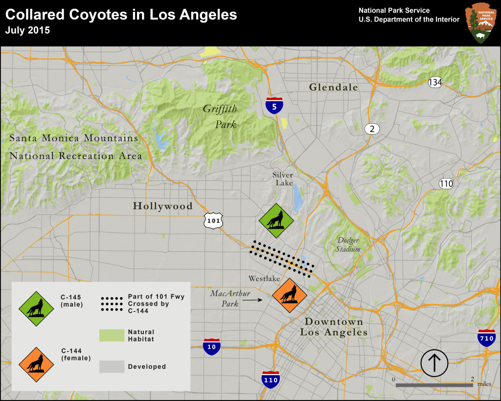 Map of collared coyotes' ranges