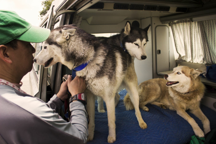 Urban musher Vickie McConathy (right) and her friend with siberian huskies Shadow, Nikki, Tundra and Diva at Talbert Nature Preserve in Costa Mesa, Calif.