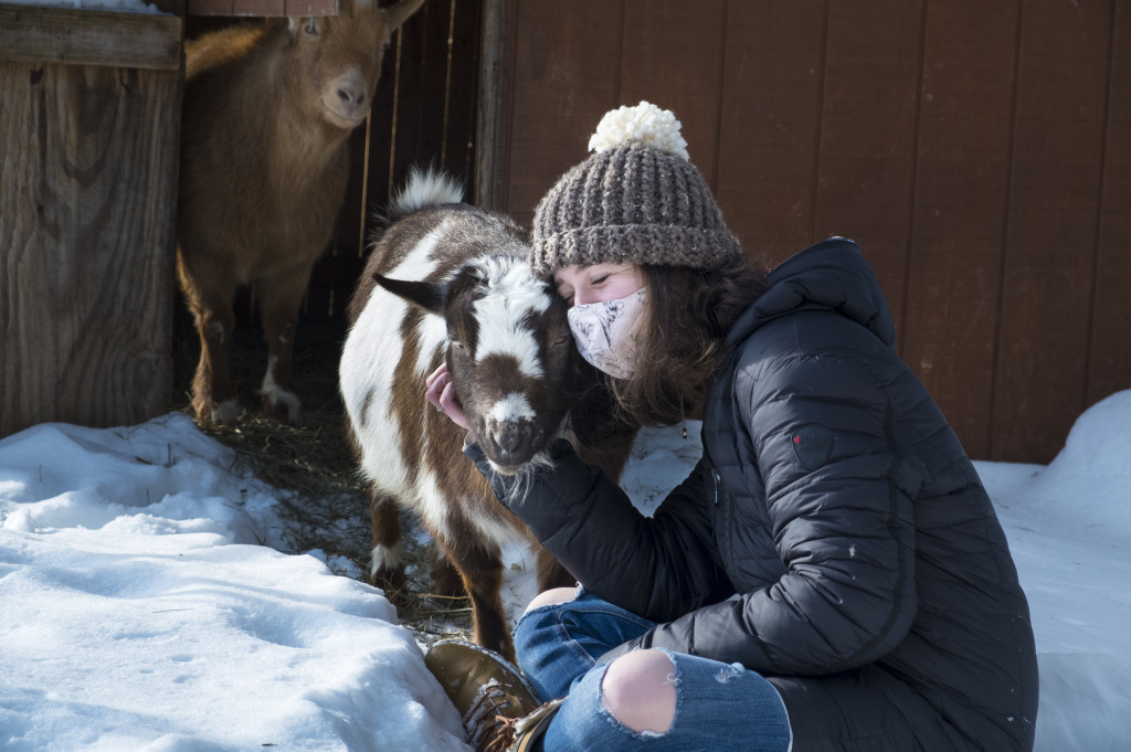 A reader asks: I want to have a private cuddle session with some goats but am concerned that the goats may have cuddled with other people. What's the COVID risk? Note: The goat and human in the photo above are part of the same pandemic pod.