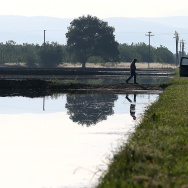 A farmer walks on the banks of a flooded rice field on May 8, 2015 in Biggs, California. As California enters its fourth year of severe drought, a lack of water has rice farmers are cutting back on their annual plantings which has left many crop dusting and seed planting operations with half of the work as normal.