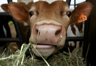 The federal EPA has ordered 13 Inland Empire dairies to clean up their act.