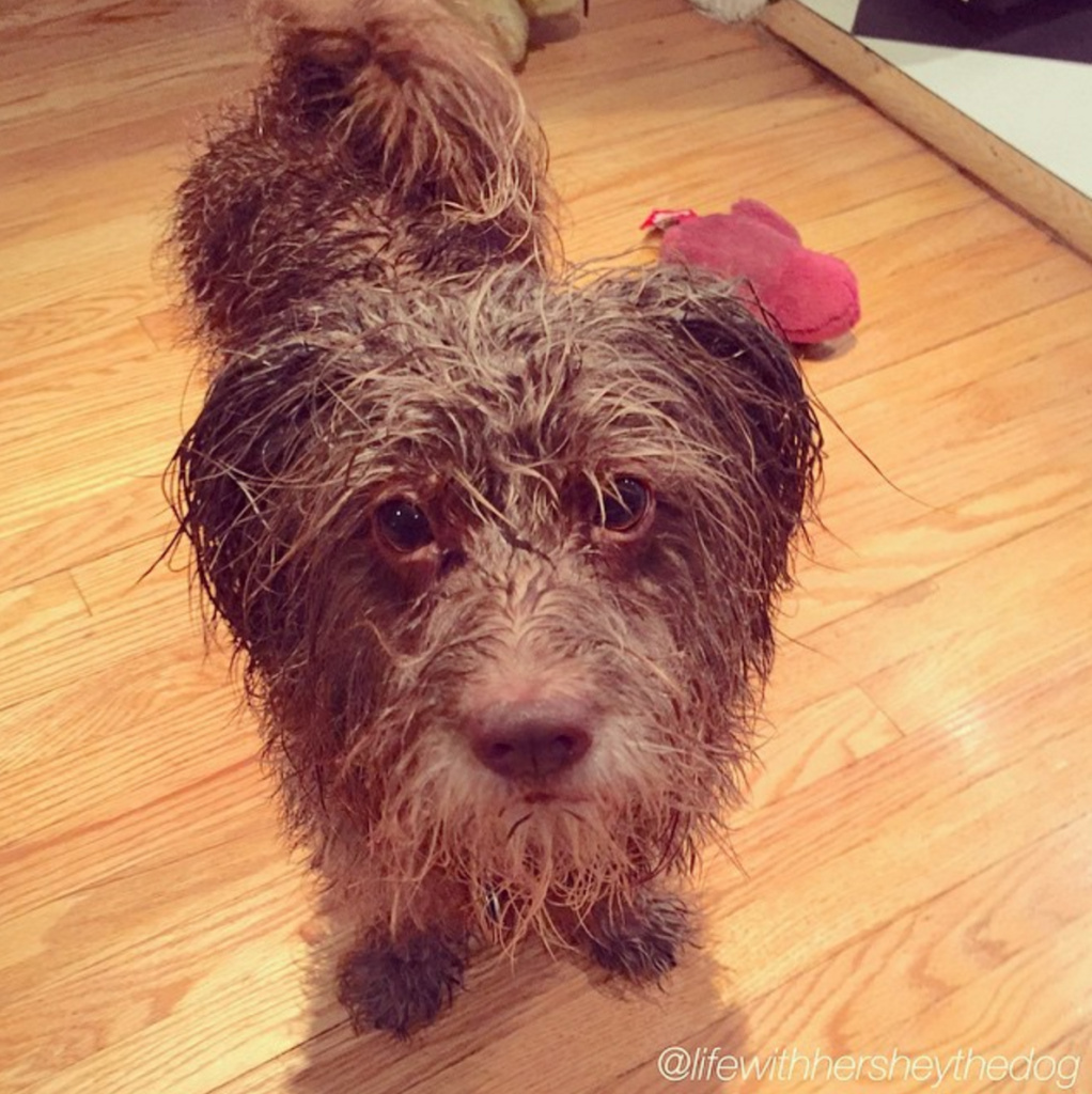 "Michele Morgan from Oregon says: ""Get some rubber boots and a raincoat for you and your dog."""